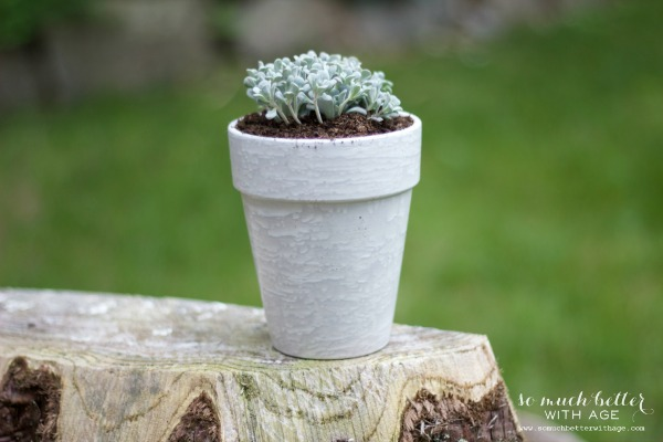 French glazed plant pots / potted plant - So Much Better With Age