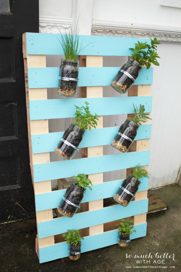 Herbs in mason jars on pallet.