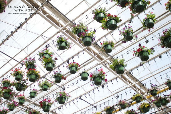 Baskets of flowers hanging by the ceiling in store.