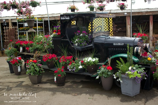 Old vintage truck with pots of flowers around it.