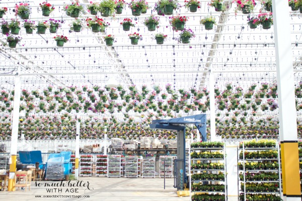 Hanging baskets in Costco.