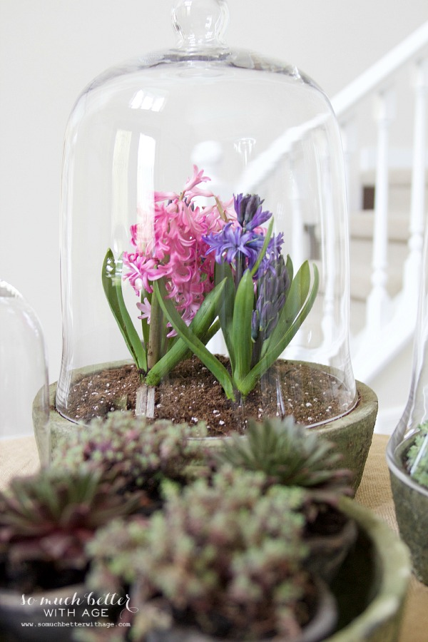 Spring flowers in terrariums / plants and flowers in terbiums - So Much Better With Age