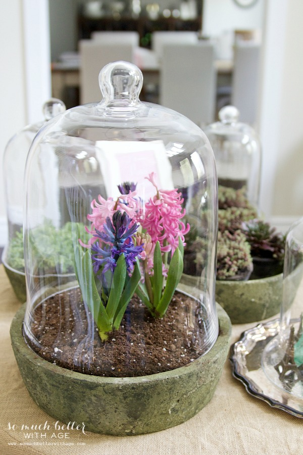 Spring flowers in terrarium / pink and purple flowers in terrarium - So Much Better With Age
