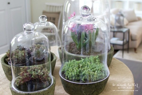 Spring flowers in terrariums - So Much Better With Age