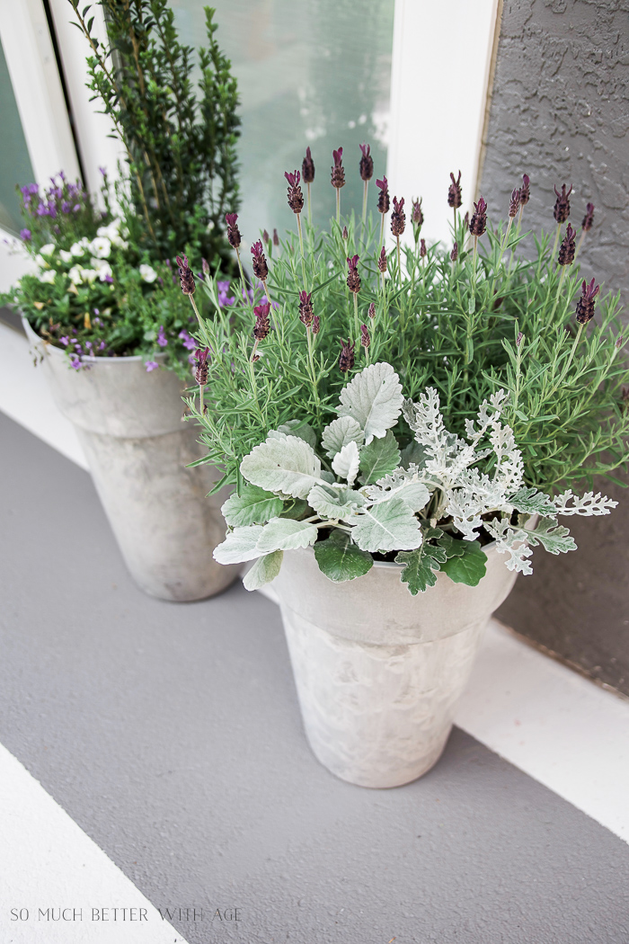 Purple and green flowers in containers on deck.