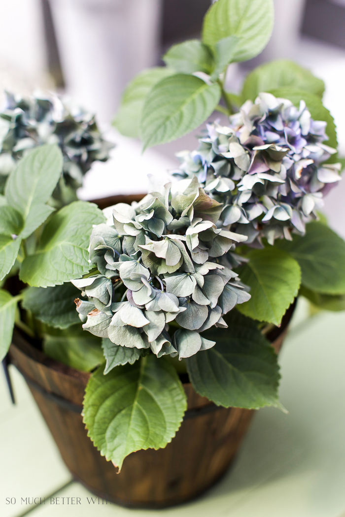 Up close picture of purple hydrangeas in a wooden bucket.