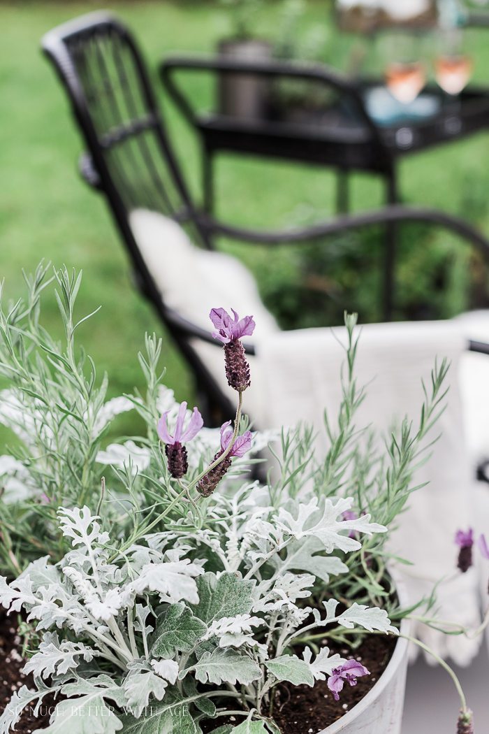 How to Create Two Outdoor Seating Areas in Small Space/lavender plant - So Much Better With Age