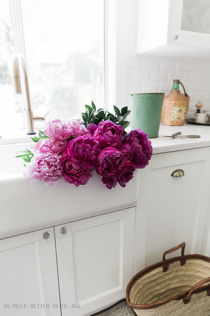 Purple peonies in white kitchen sink.