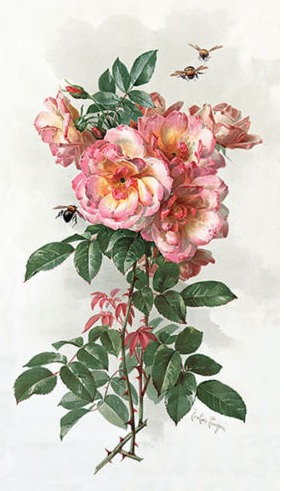 Paul do Longpre Floral Prints, My Favorite French Artist/Wild Roses - So Much Better With Age