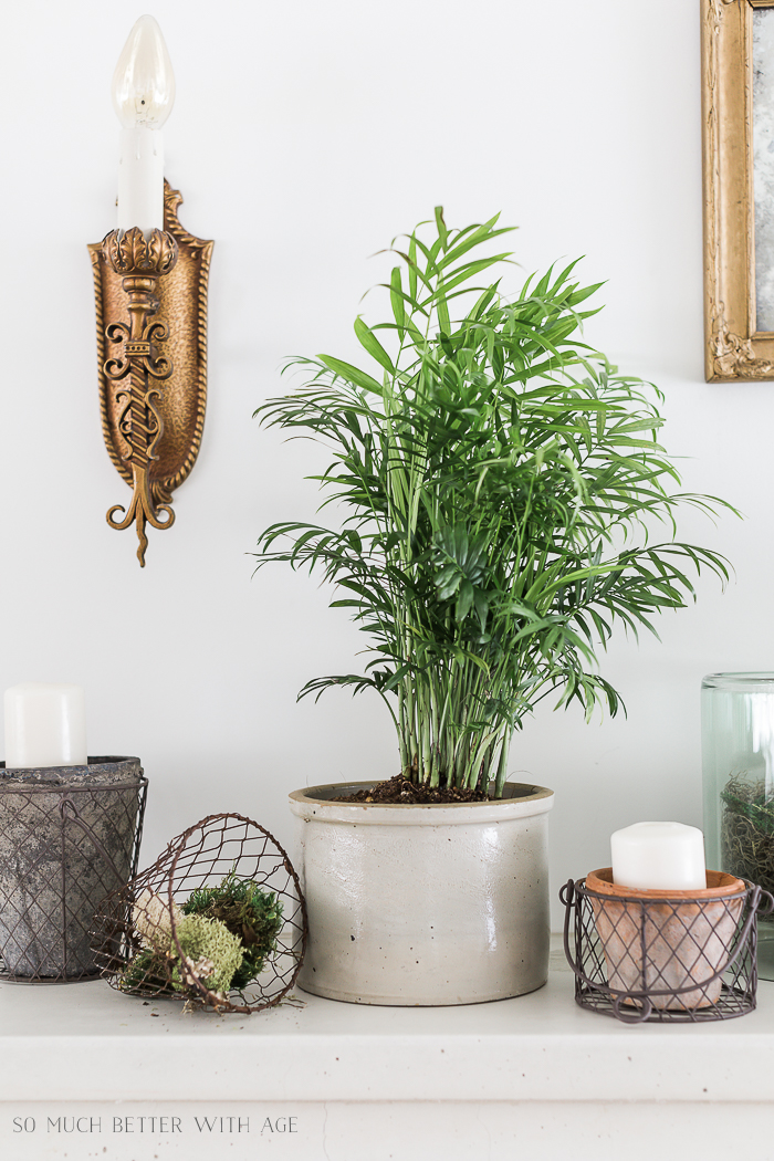 Creative Greenery Spring Mantel/ palm plant - So Much Better With Age