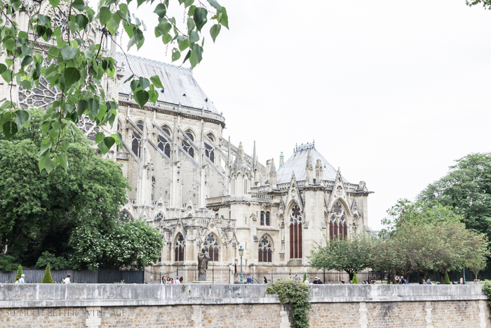 Paris Highlights Including Notre Dame/Notre dame cathedral in Paris - So Much Better With Age