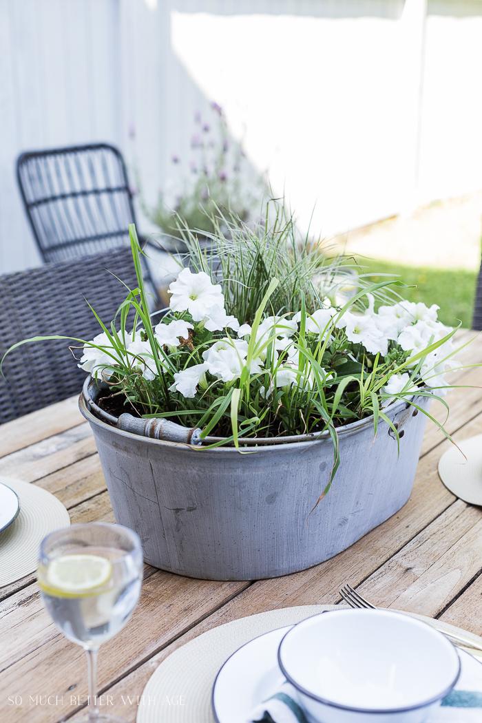 Flowering plants in tin bucket.