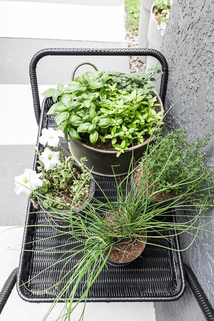 Herb garden on black bar cart.