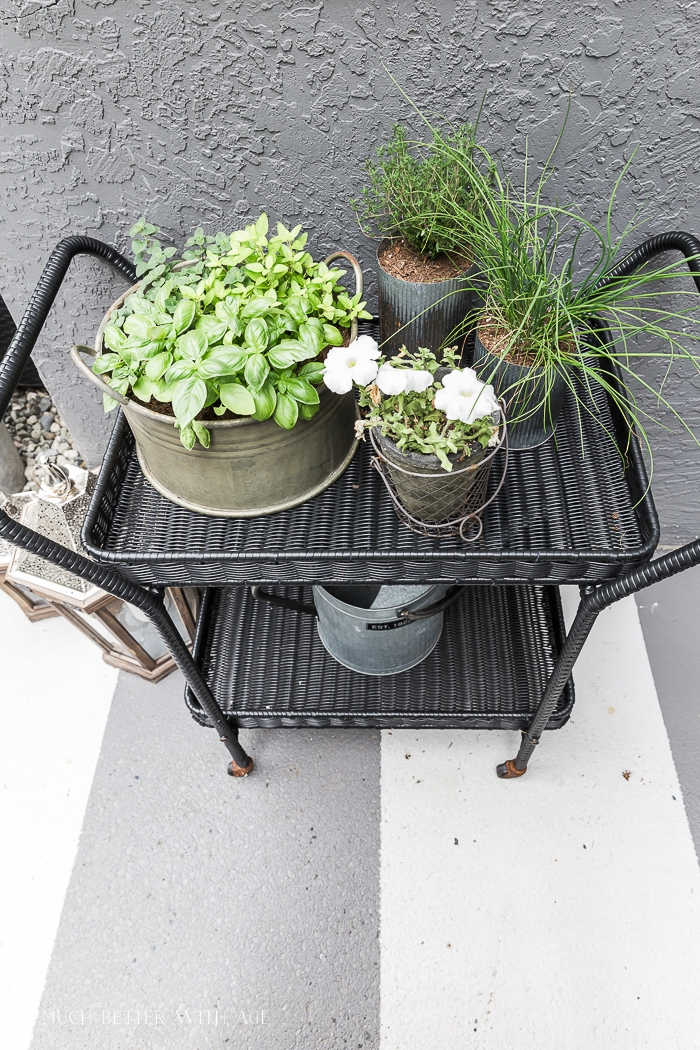 Planted herbs in small containers on cart.