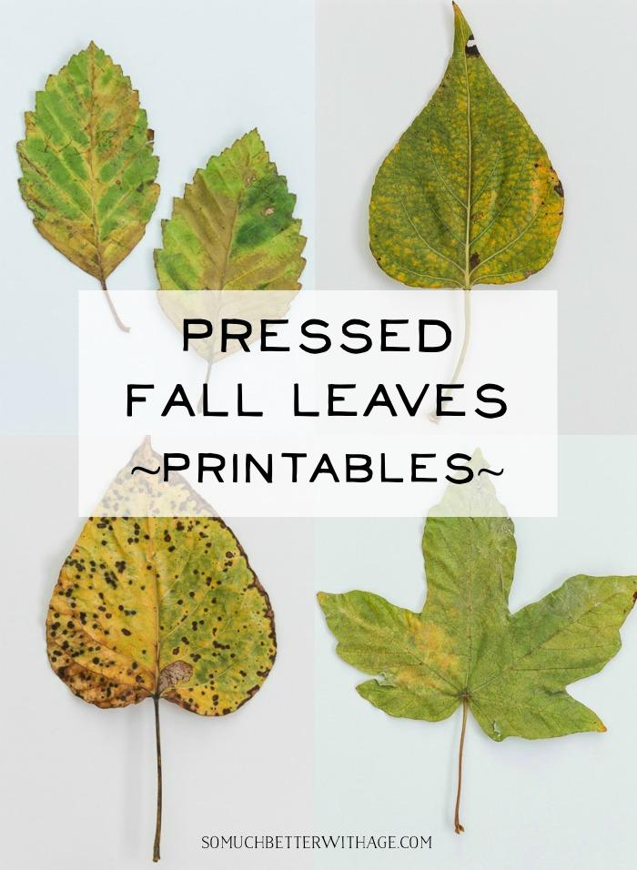 Pressed Fall Leaves Printables.