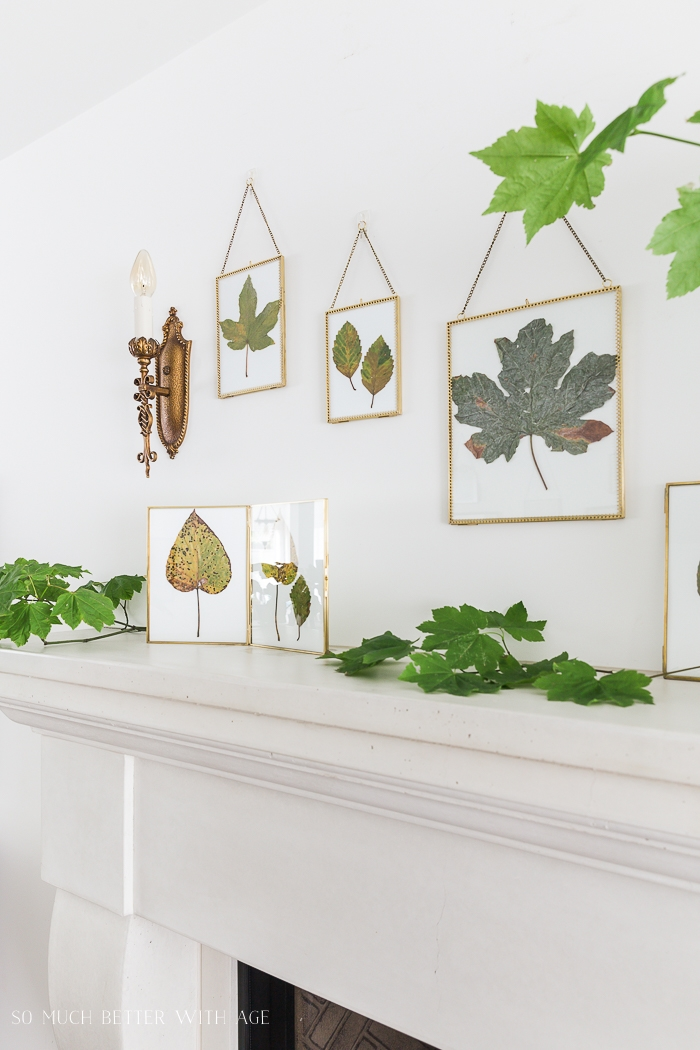 Leaves in frames on wall above fireplace.