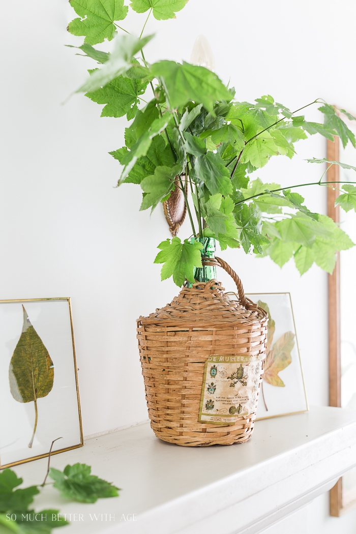 Green leaves in demijohn vase.