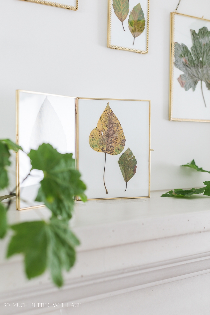 Assortment of fall leaves in frames on wall.