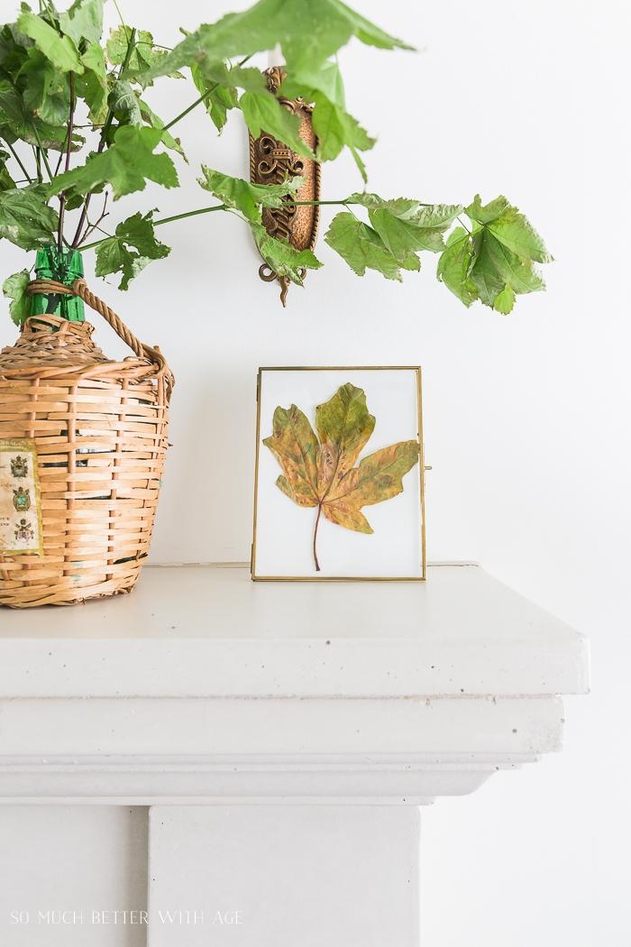 Fall leaf in frame on shelf beside fresh leaves.
