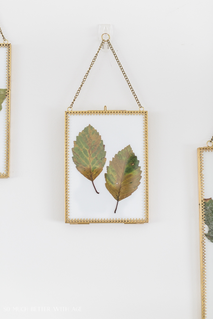 Two fall leaves in gold frame.