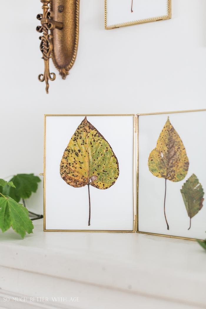 Fall leaves in frames.