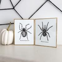 Halloween Spider / Tarantula Printables
