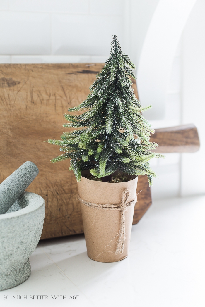 Close-up of mini evergreen tree wrapped in kraft paper.