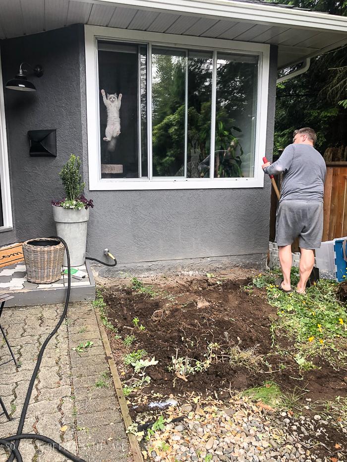 Cat hanging on window screen, man raking front yard.