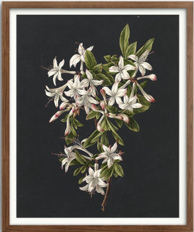 Retrofield - bunch of azaleas.
