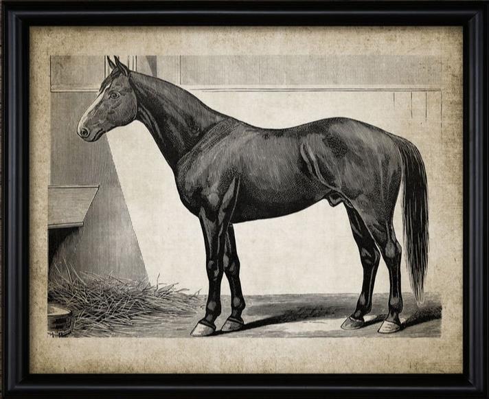 Instant Graphics - vintage horse print.
