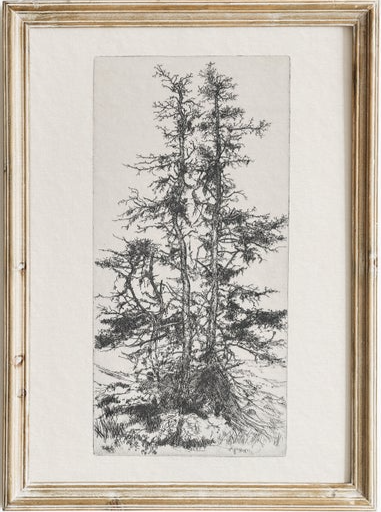 North Prints - antique pine tree sketch.