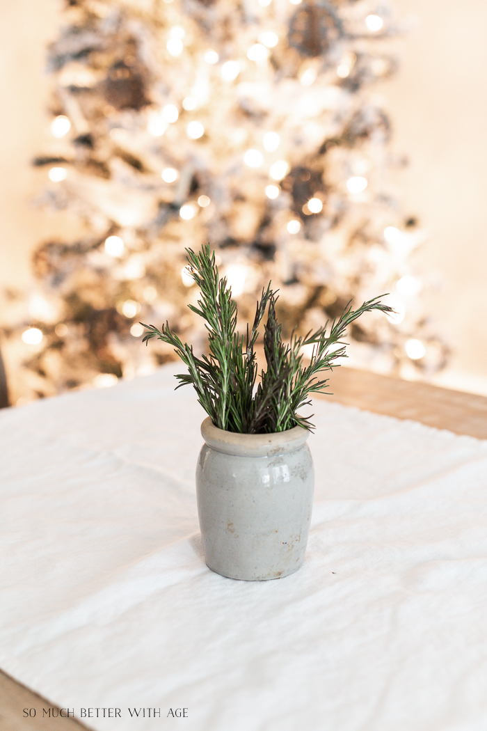 Rosemary stems in small pot with Christmas tree in background.