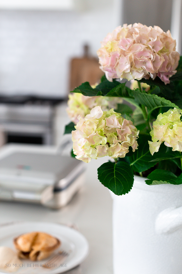 Close up of hydrangea flowers in kitchen.