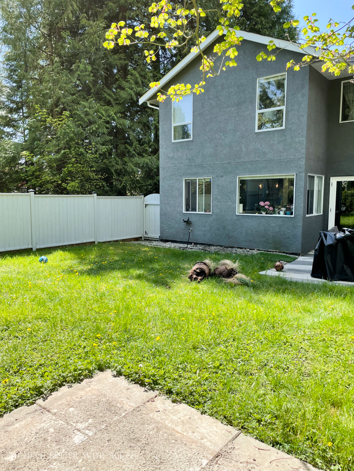 Back yard looking towards grey house.