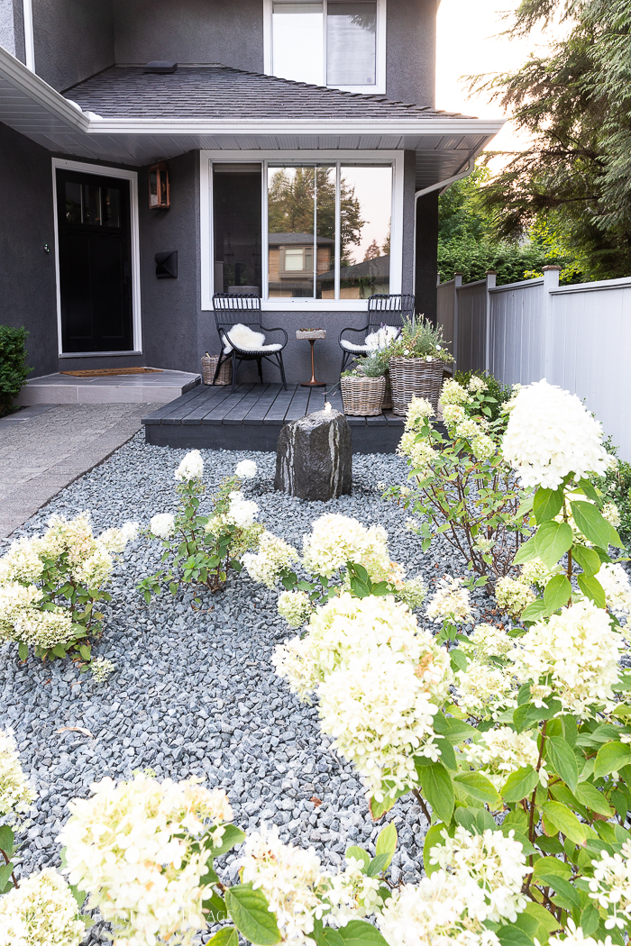 Limelight hydrangeas and crushed rock in front of house with basalt rock gurgler fountain and black patio deck.
