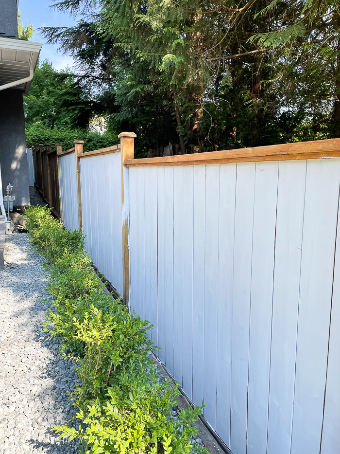 Staining a wooden fence a solid stain grey color.